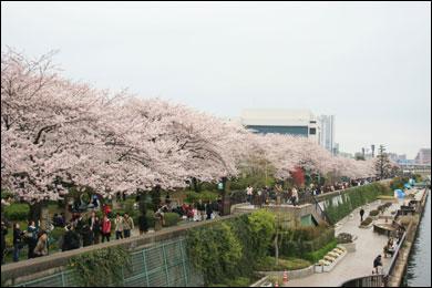 隅田公園 写真